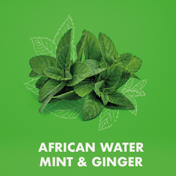 African Water Mint & Ginger
